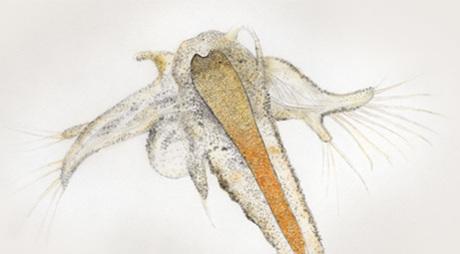 ORI-N3 image
