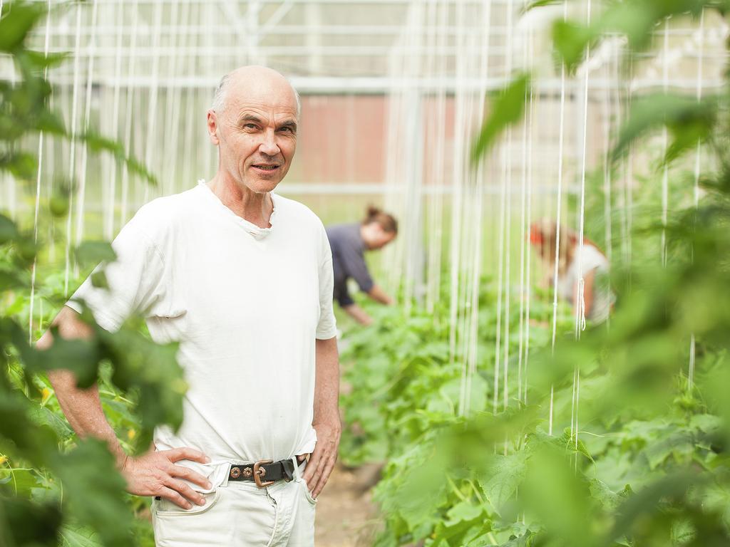 Foto av rektor Aksel Hugo ved Sogn Jord- og Hagebruksskule inne i eitt av drivhusa ved skulen. Vi ser mange grøne planter og nokon som jobbar med dei bak han.