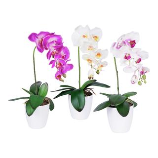 bloms, hygge, interiør