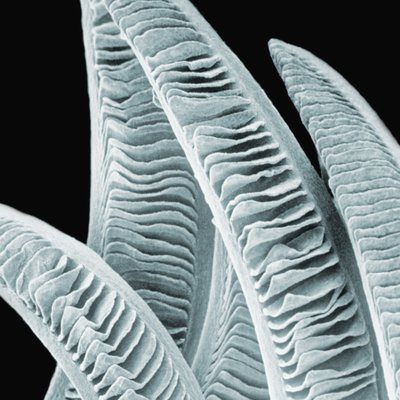 Microscopic view of fish gills