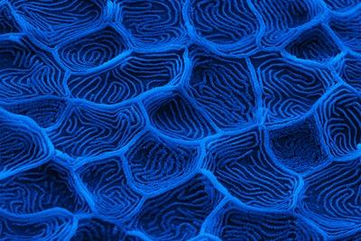 Mikroskopbilde av fiskeskinn