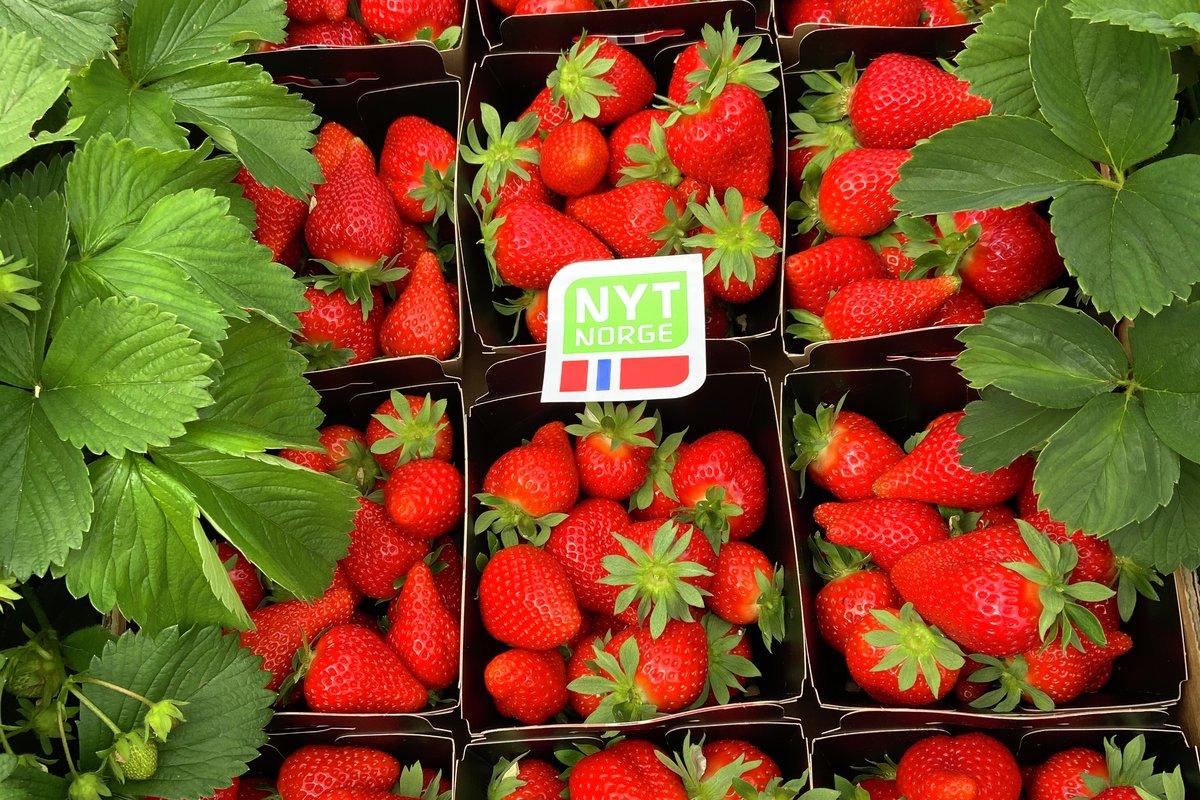 Sommer i Stiftelsen Norsk Mat og KSL