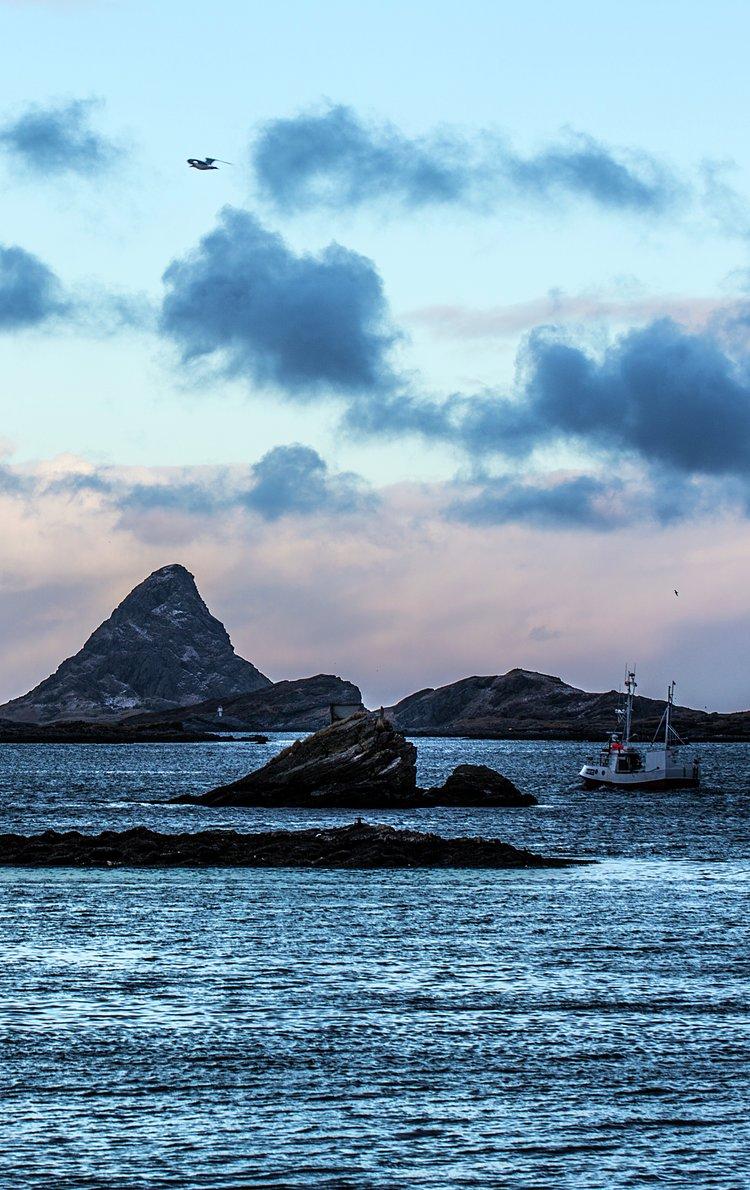 Tørrfisk fra Lofoten. Foto: Stian Broch