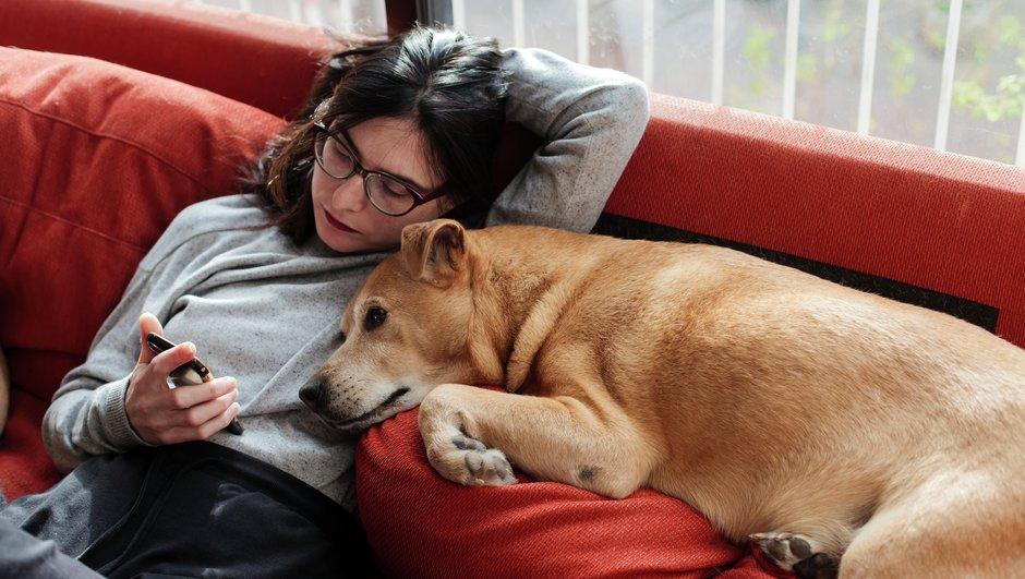 Kindlusta oma koer või kass - nii on mõlemal kindlam