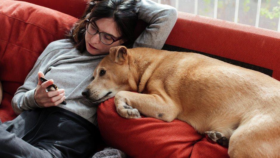 Koiran Vakuutus Hinta