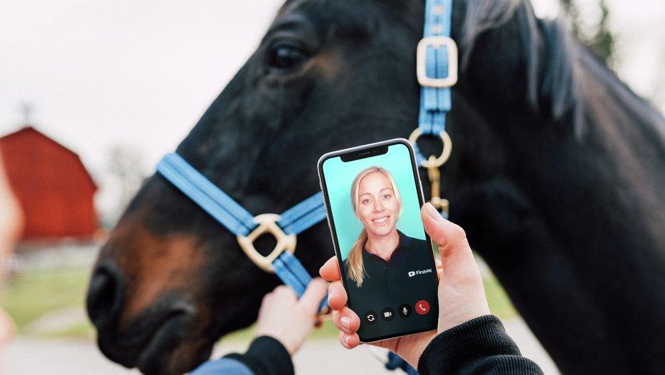 FirstVet för häst