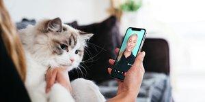 katt och mobil