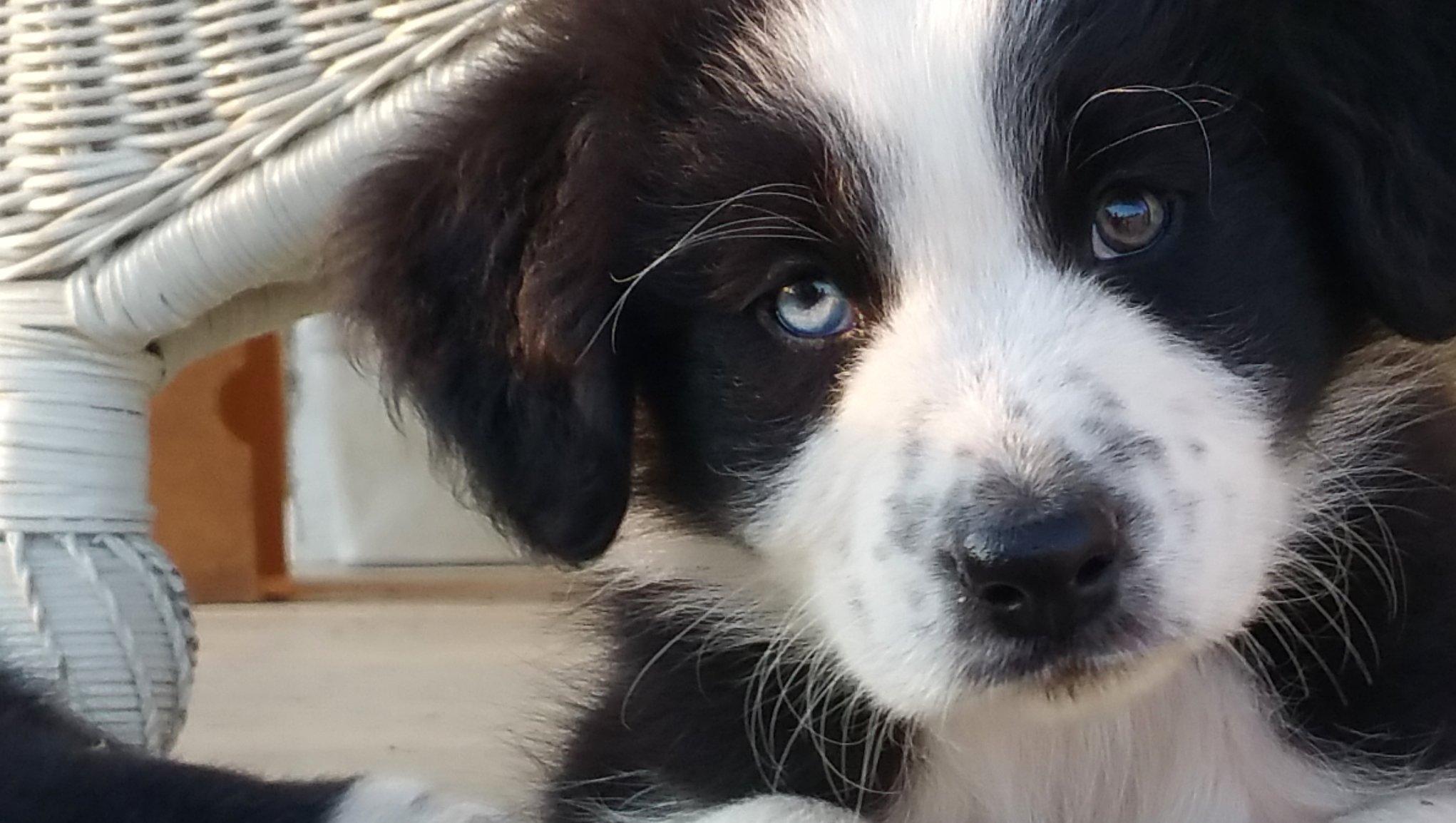 Hundeforsikring?