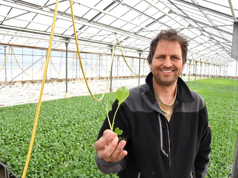 Bonden sjøl: Hans-Albert Huseby i veksthuset viser oss hvordan de dyrker fram små planter. Her er det blomkål og brokkoli som dyrkes før de skal plantes ut.