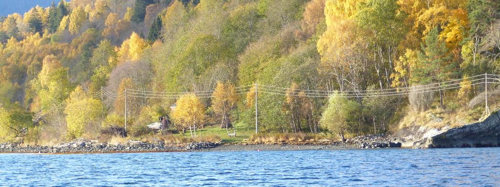 Foto av tomta der dagsturhytta i Luster skal kome. Biletet er teke frå sjøen, og vi ser mot ei strond, der det er ei opning i skogen.