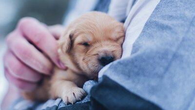Nyfödd hundvalp
