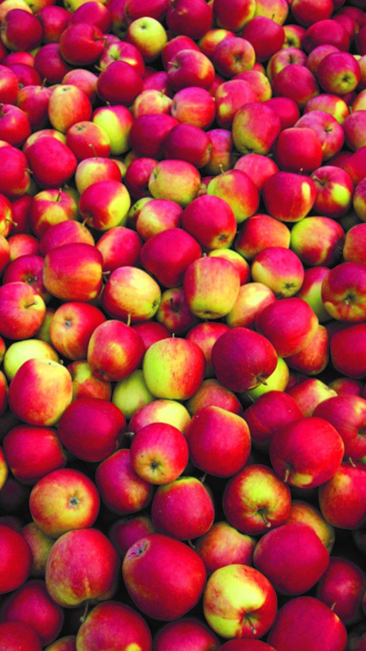 Epler fra Nyhuus Gard