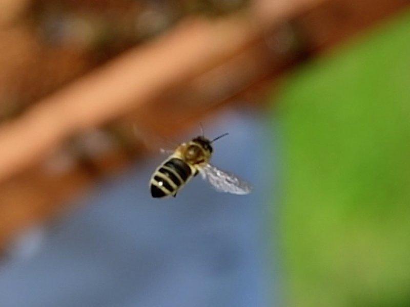 flyvende-bie