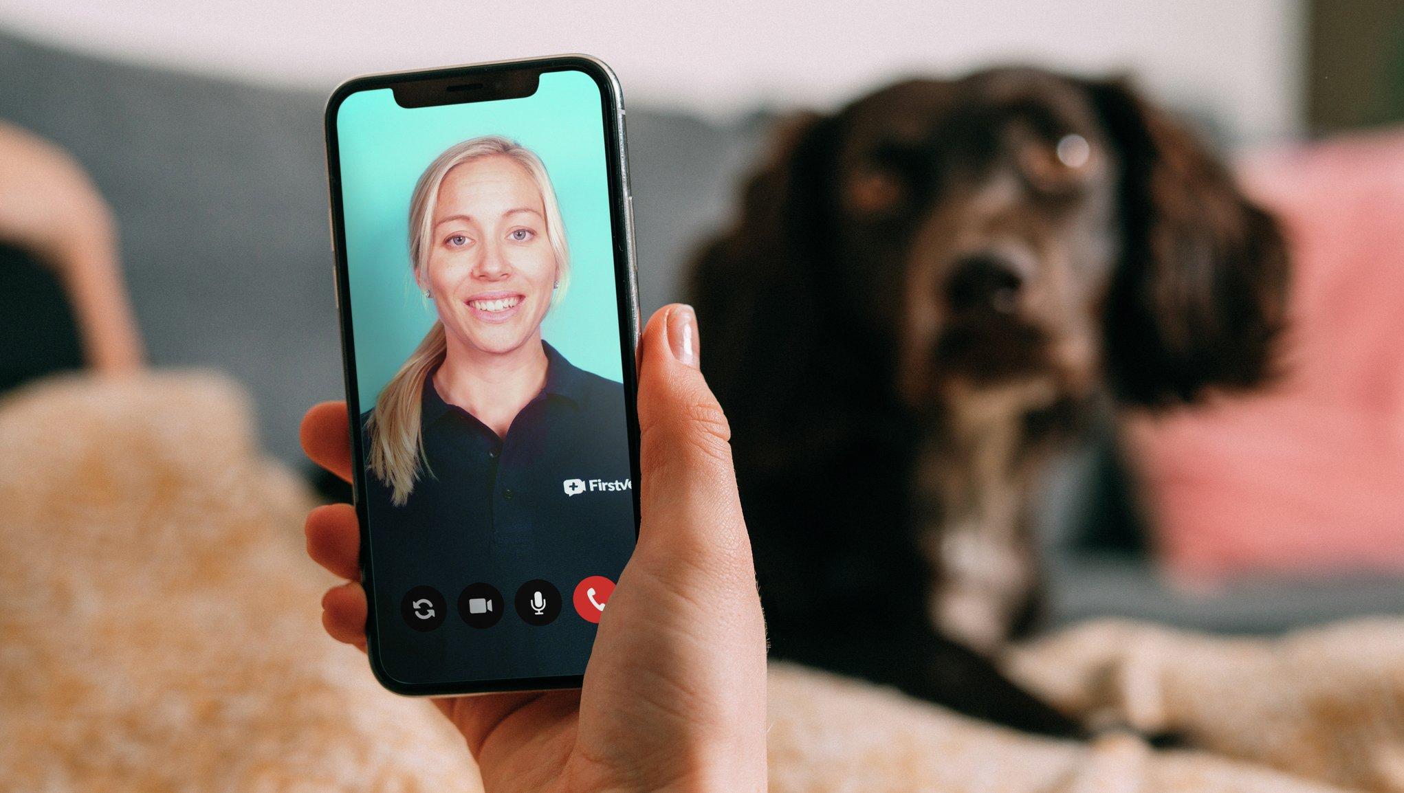 Hund får hjälp av FirstVet