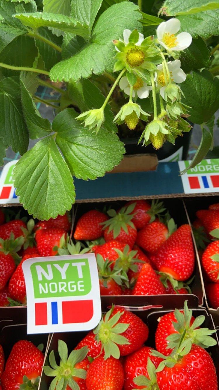 Norsk jordbær med Nyt Norge