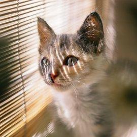 katt tittar ut genom fönster