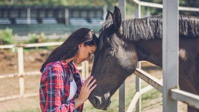 Ruutupaitainen nainen ja hevonen aitauksessa