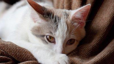 katt vilar sig