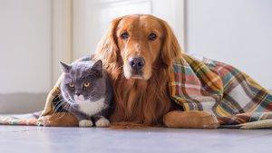 Katt och hund