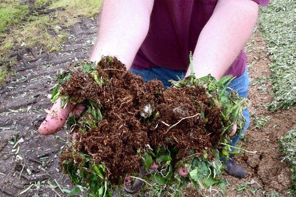 Skjærgården gartneri bruker biokull for å fange co2 i jorda