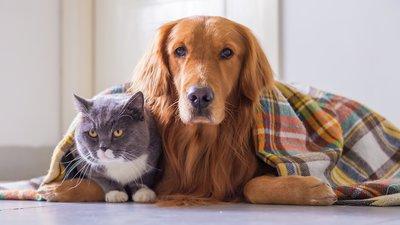 Hund och katt under filten