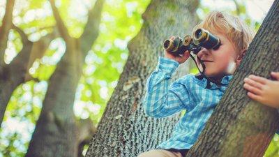 barn klättrar i träd
