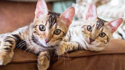 Katter vilar på soffan