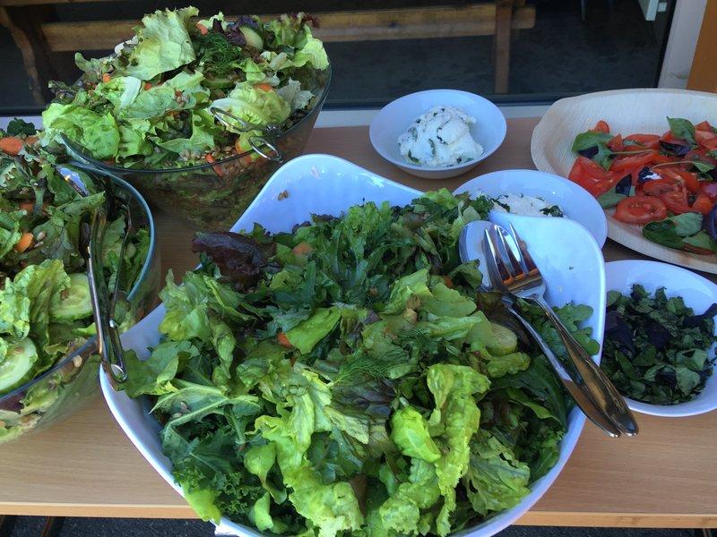 Økologisk salat fra sommerskolen på Bygdøy Kongsgård