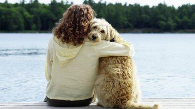 Hund och tjej på brygga