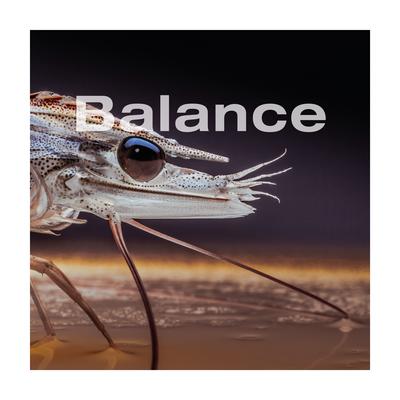 Balance shrimp image