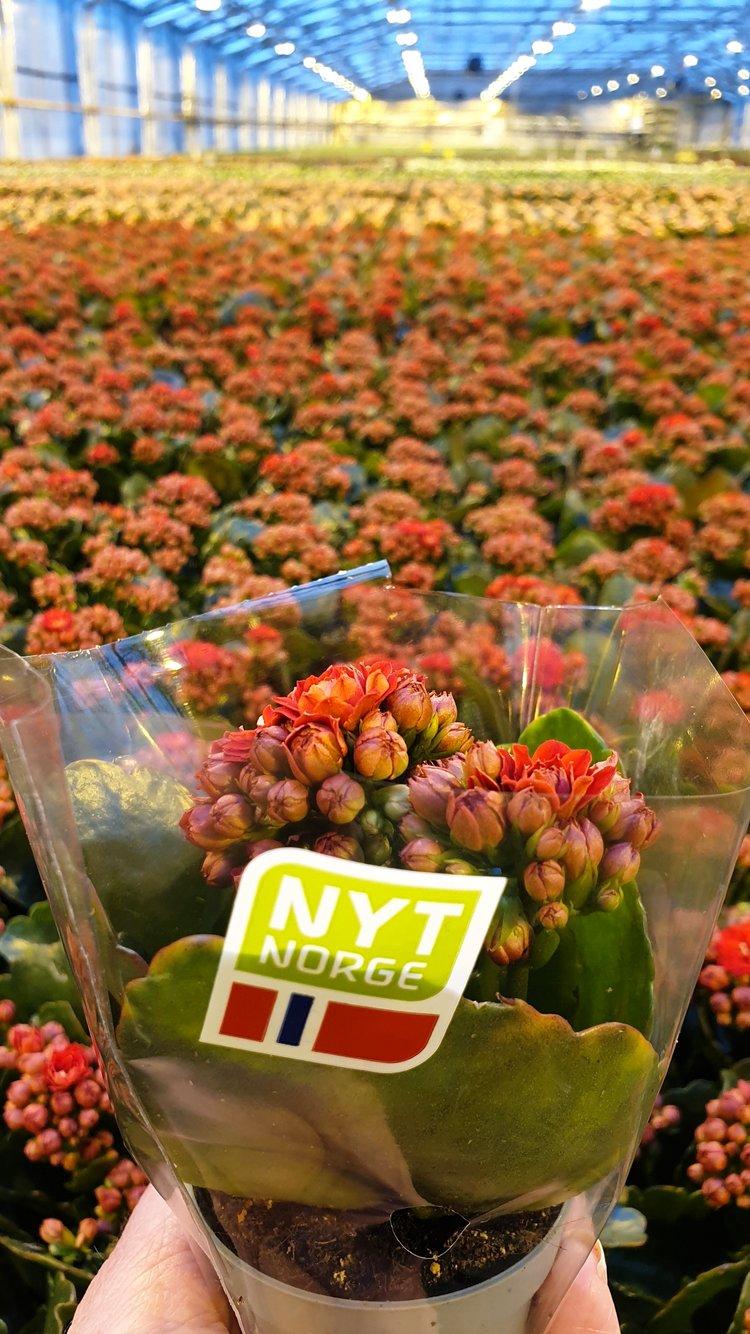 Norske blomster merket med Nyt Norge