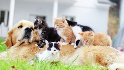 Kissat ovat kiipeilleet koiran päälle