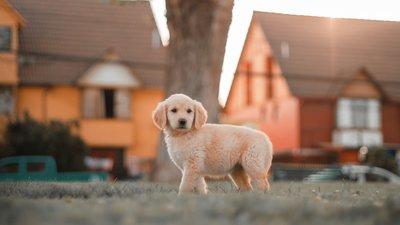 Hund vid ett hus