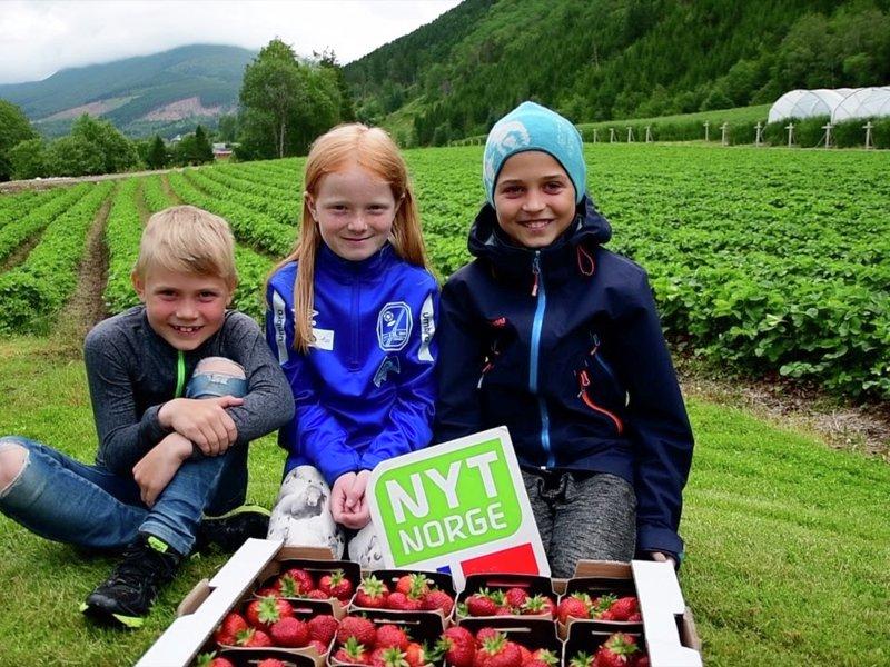 Norske jordbær fra Valldal