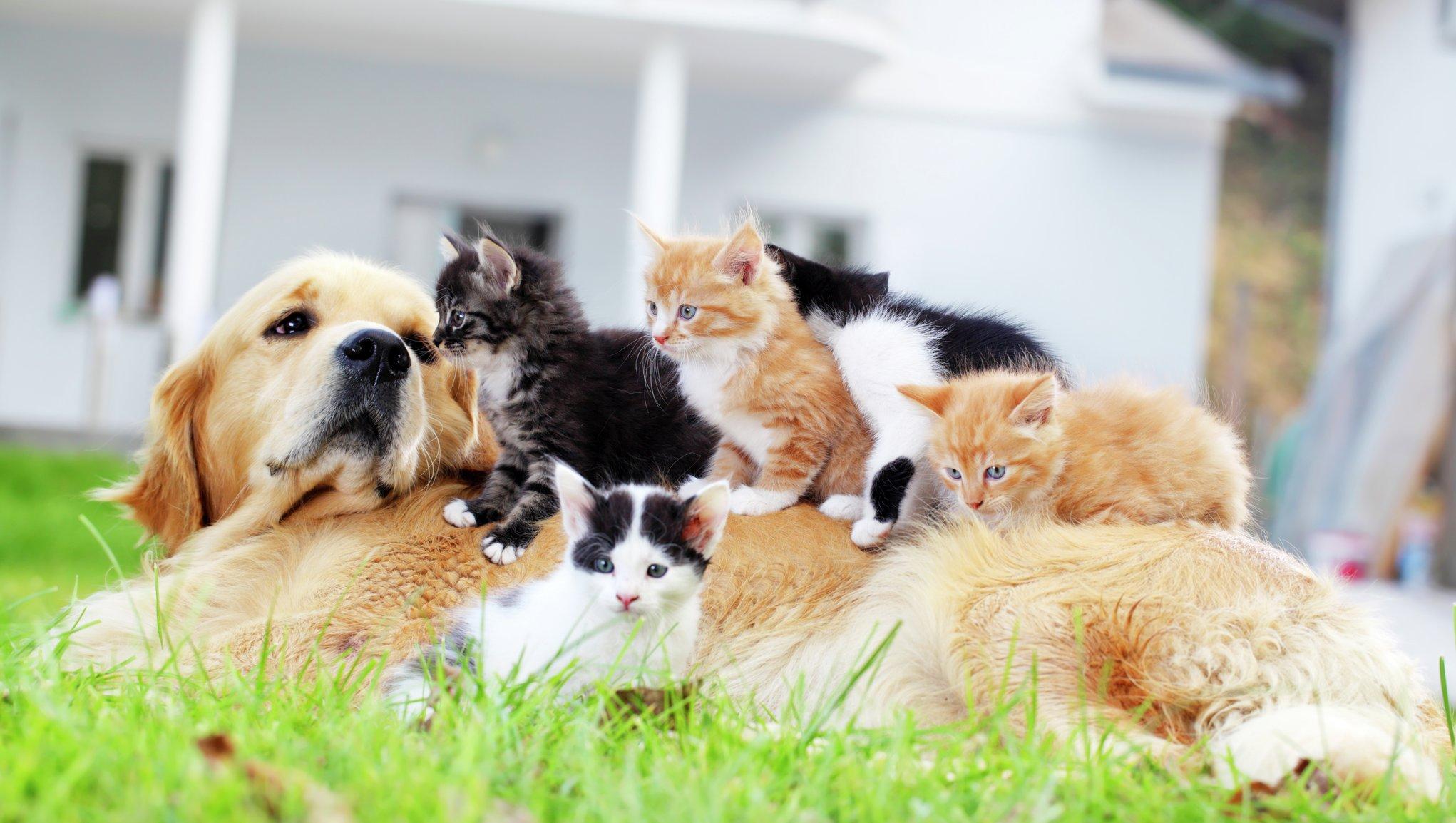 Mājdzīvnieka apdrošināšana var pasargāt no neparedzētiem izdevumiem, ja mīlulis saslimst