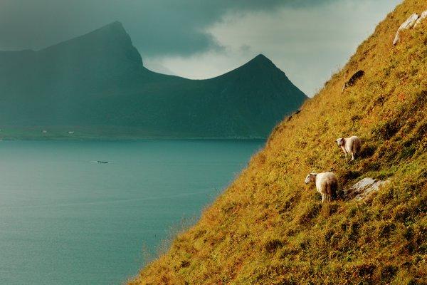 Lokalmat fra Lofoten og Vesterålen