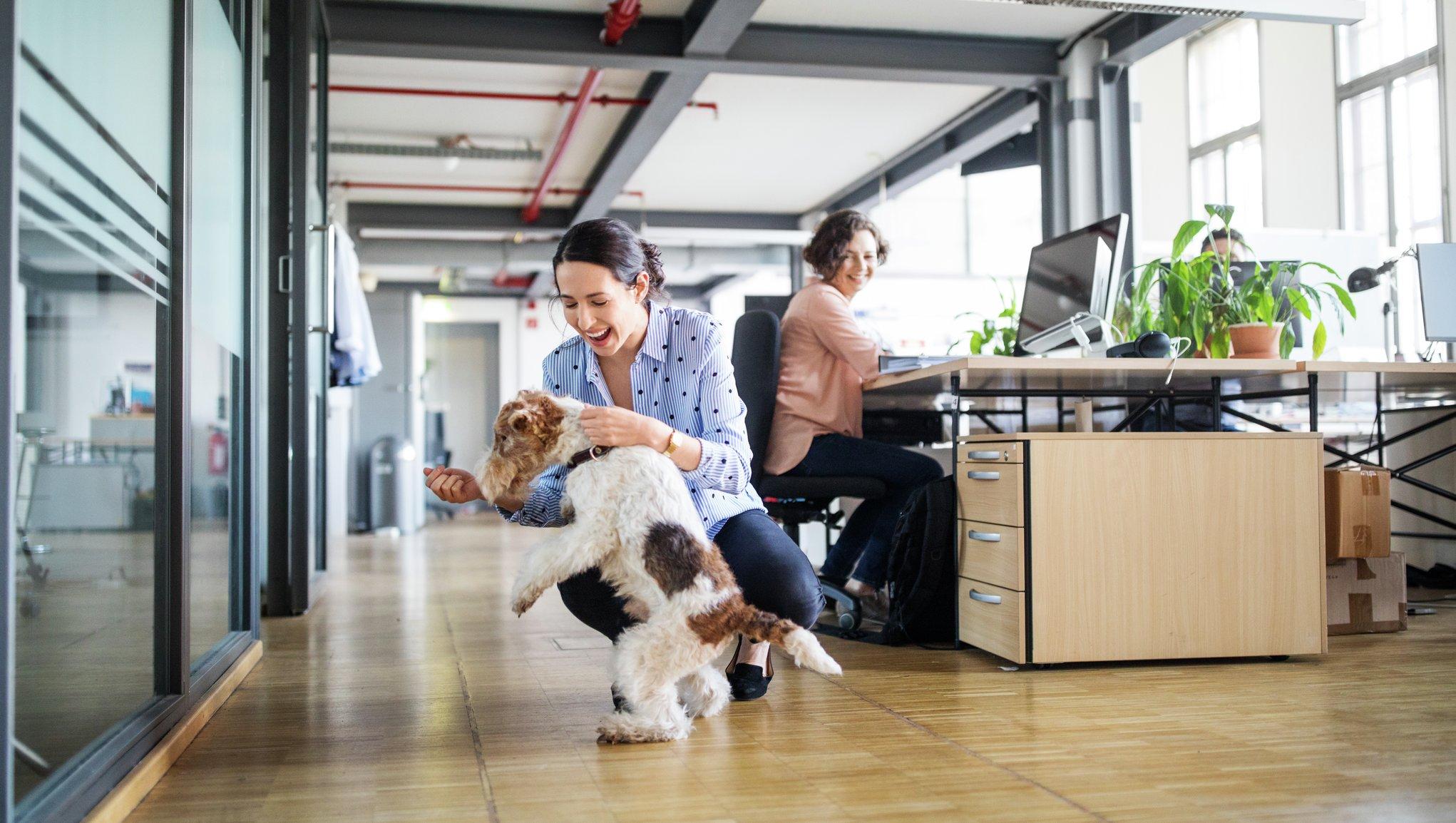 Apdrošināšanas risinājumi birojiem