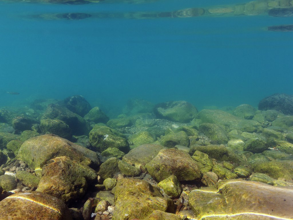 Foto som syner steinete sjøbotn.