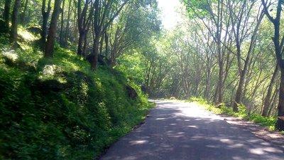 Landsväg genom skog