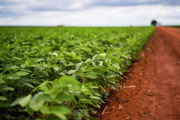 Brazilian soy farm