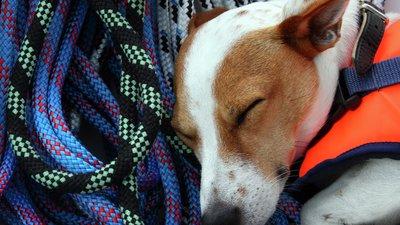 hund med flytväst