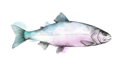 Prime & Express fish illustration