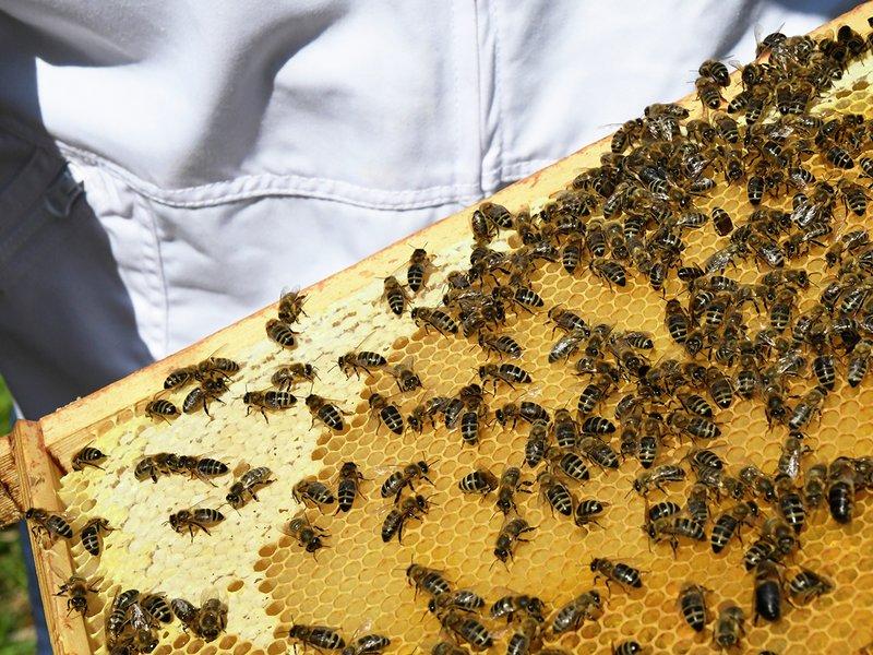 birøkter honning