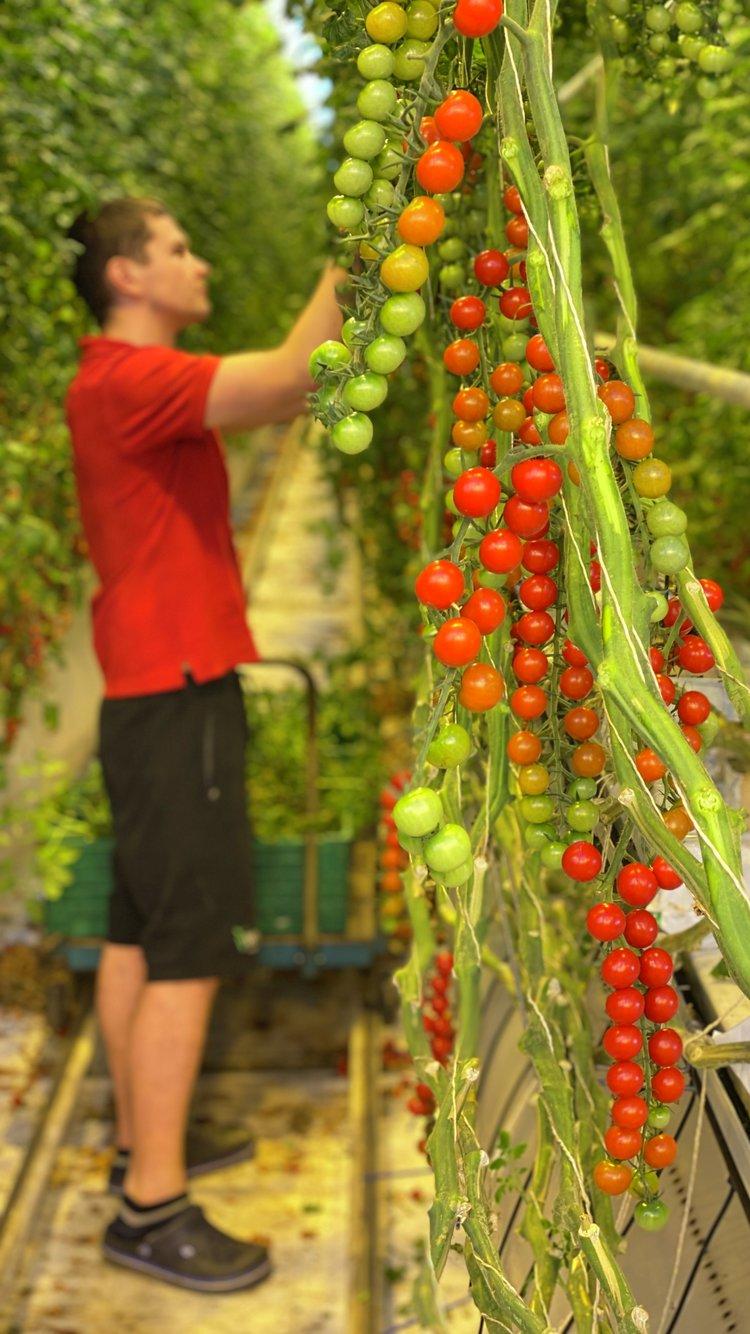 Wiig gartneri på Jæren