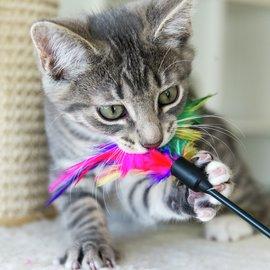 katt leker