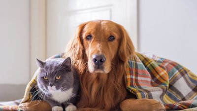 hund och katt under filt