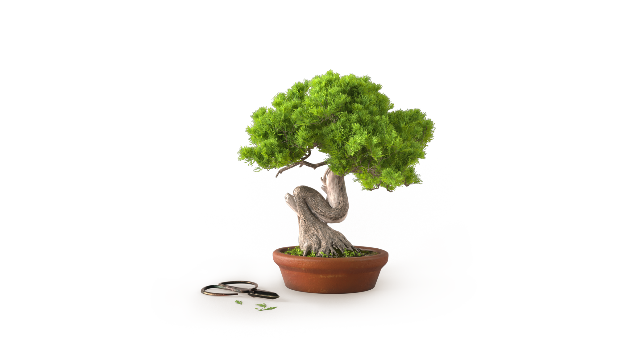 Bonsaiträd