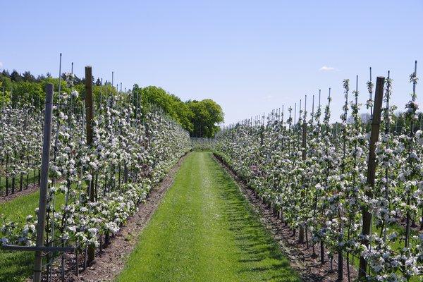 EU vil ha 25% økologisk landbruksareal innen 2030