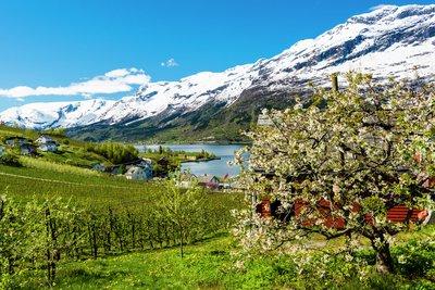 Vår i Fjord Norge