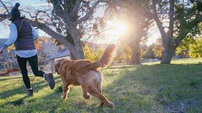 springande hund och hundägare